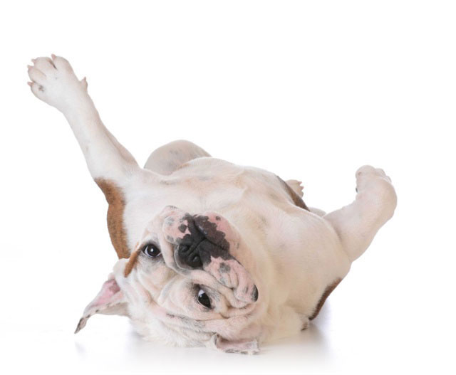 Brunswick Crossing is the perfect place for your dog to live in Frederick MD