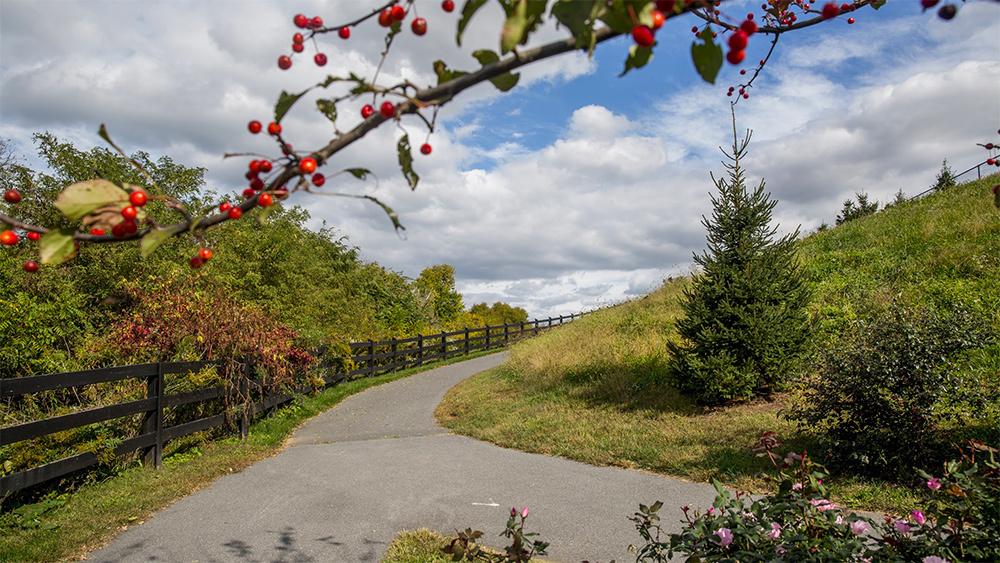 Brunswick Crossing Walking Trail
